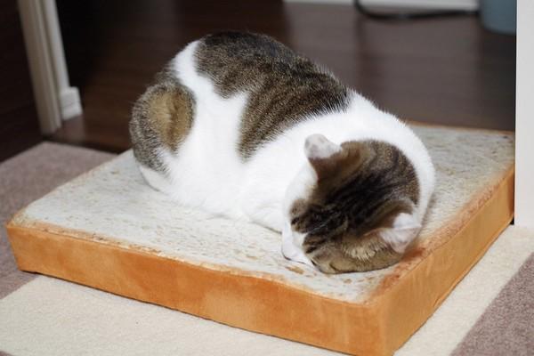 日本品牌 NITORI 超巨人氣的「貓咪吐司軟墊」